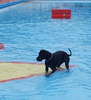 Heute waren wir in Bippen beim Hundeschwimmen.