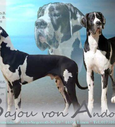 Bajou von Andorf